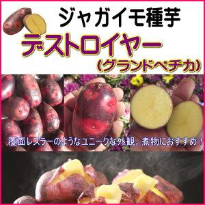 ジャガイモ デストロイヤー(グランドペチカ)500g種芋 10P07Feb16