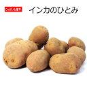じゃがいも 種芋 インカのひとみ 500g ジャガイモ 【ラッキーシール対応】