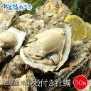 宮城県松島産 殻付き牡蠣50個 送料無料 旬の身入りの良いカキを急速冷凍しました!