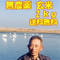 令和元年産新米千葉県産コシヒカリ4.5kg玄米<白米>【送料無料】