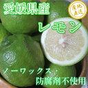 【送料無料】無農薬レモン5kg 愛媛県中島産 ノーワックス・防腐剤不使...