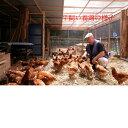 南総フォレスト卵 平飼い 養鶏卵 (10個入りx4パック) :中本養鶏