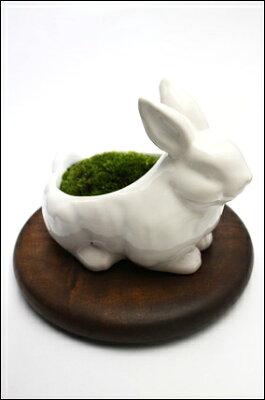 うさぎ陶器コケ盆栽、敷き布、霧吹き、活力剤がセットで初めての苔盆栽も安心スタートできます...