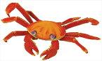TST safari (サファリ) ガラパゴスベニイワガニ 蟹 カニ フィギュア おもちゃ 261729