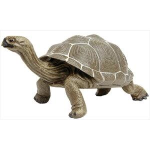 TST safari (Safari) Galapagos Giant Tortoise (Parent) Turtle Turtle Toy Toy 260729