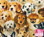 【B&BFABRICS】デジタルプリント・ドッグ広巾140cmリアルプリント犬USAコットン【生地・布】91226-01