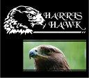 ハリスホーク (モモアカノスリ) ステッカー 26cm×9cm色は3色から猛禽類ファンに!