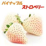 『パインベリー/パイナップル・ストロベリーイチゴ苗4個セット』