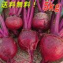 『高糖度ビーツ 5kg』農薬不使用! 千葉県南房総市産 送料無料!★発送当日に収穫!!※訳あり