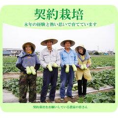契約栽培の農家の皆さん