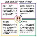 【奈良交通バス LaQ】 知育玩具 おもちゃ パズル ラキュー ボンネットバス 脳トレ 子ども 3