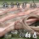 林屋の鰻はすべて国産。生うなぎ(5本) 特製たれ・肝・骨付き