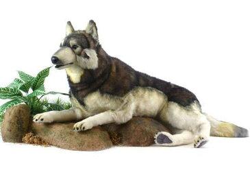 【HANSA】リアルぬいぐるみ森林オオカミ 100cm只今在庫切れ、次回入荷は年明け1月末の予定