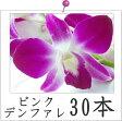 ピンクデンファレ30本洋蘭(ピンク)◎【激安】【ご自宅用】【RCP】02P01Oct16