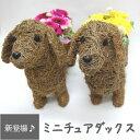 花 送料無料 犬 ペット ワンコ ミニチュアダックス 柴犬 コーギー フラワー 誕生日 お祝い バラ ガーベラ お礼 お供え 母の日 父の日 敬老の日 結婚記念日