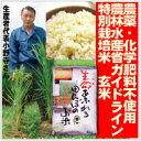 【生命あふれる田んぼのお米・玄米20kg】(4kg×5袋)産地直送【RCP】