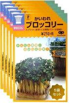 TVで話題!スルフォラファン高含有のブロッコリースプラウト!栄養たっぷり!【ブロッコリースプラウト種40ml】5袋セット
