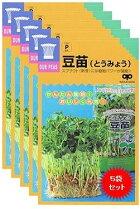 【郵便配送商品】TVで話題のスプラウトの種免疫力を強化【豆苗(とうみょう)の種60ml】5袋セット