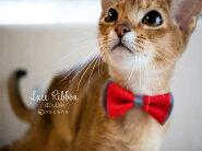 猫の首輪リボン赤ピンク