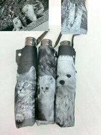 (^O^)/☆~~なかよし・メインクーンキャットとかわいい2匹の白猫ちゃんたち~~55cm折りたたみ傘~~軽量傘200g~~