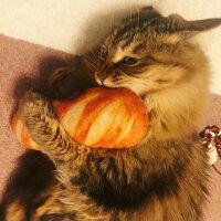【送料無料】猫用ぬいぐるみパン2個セットまたたび入り猫用ギフトプレゼント