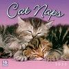 2020猫カレンダー居眠りニャンコ