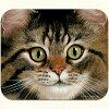 【アデリーン・ハルヴァーソン】猫のマウスパッドロングヘアータビー