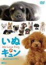 シンフォレストDVD いぬキュン 癒しのわんこシアター We Love Dog[DVD] / BGV