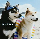【送料無料選択可!】ALIVE [通常盤] / キマグレン