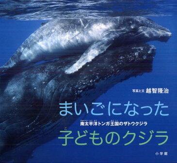 まいごになった子どものクジラ 南太平洋トンガ王国のザトウクジラ (小学館の図鑑NEOの科学絵本) (児童書) / 越智隆治/写真と文