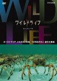 ワイルドライフ オーストラリア メルボルンの海 10万匹のカニ 謎の大集結 / ドキュメンタリー