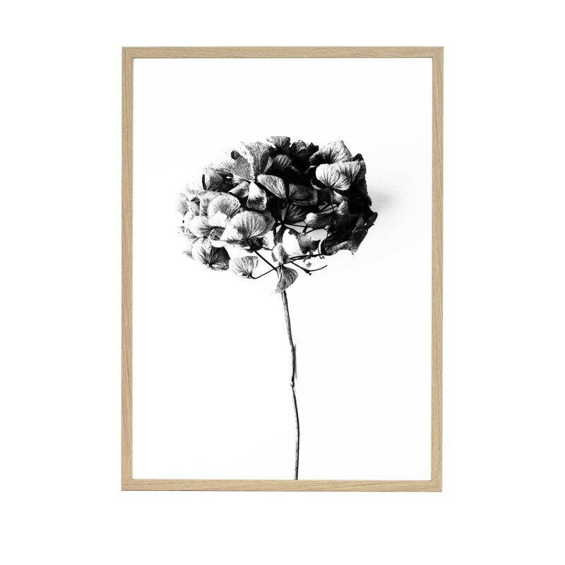 【復刻しました】ONE MUST DASH by nest ポスター HONEY HONEY 50x70cm 北欧 おしゃれ インテリア インテリア雑貨 モノクロ ワンマストダッシュ アート アートポスター 50 70 花 あじさい 紫陽花 アジサイ 絵画 絵 壁掛け モダン