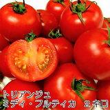 トマト ミディトマト 母の日 新鮮 生産者直送 宅配便なら全国送料無料  ミディ・フルティカ バラ(パックなし)2キロ 甘味と酸味旨みのバランスがよくフルーティな「フルティカ」です