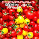 販売再開 トマト ミニトマト 新鮮 生産者直送 宅配便なら全国送料無料  数種類のトマトが入った『店長おまかせバラ(パックなし)ミックス』1.5キログラム2,700円お入れする品種・配分は店長にお任せください