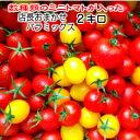 トマト ミニトマト 生産者から直送 宅配便なら全国送料無料 ...
