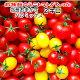 トマト ミニトマト 生産者から直送 宅配便なら全国送料無料 父の日 当店一番人気!数種類の…