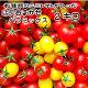 【トマト】【ミニトマト】【送料無料(一部地域を除く)】お待たせいたしましたトリアンジュヌー…