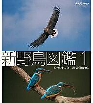これが「動く野鳥図鑑」の決定版!Blu-ray 新 野鳥図鑑 第1集 狩をする鳥/森や渓流の鳥【楽ギ...