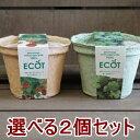 ハーブ 栽培セット 選べる2個セット 栽培キット エコットS2個 エコポット おうち時間 家庭菜園
