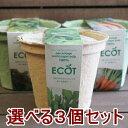 野菜 栽培セット 選べる3個セット 栽培キット エコットM3