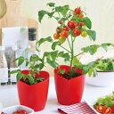 ハート型ミニトマト栽培セット
