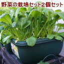 野菜 栽培セット 選