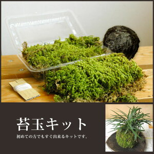 初めての方でもすぐ出来るキットです。苔玉に必要な苔・土(苔玉用に配合した土)・テグス(糸...