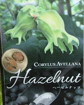 ヘーゼルナッツ(セイヨウハシバミ)《果樹苗》「☆」