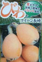 枇杷、ビワ(クィーン長崎)《果樹苗》
