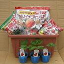 プランター デルモンテイチゴ簡単栽培キット (いちご苗3ポット&プランター・用土・肥料・鉢底土) :スターター セット