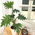 フィロデンドロンタンゴ4号鉢ドラゴンリーフ観葉植物インテリア
