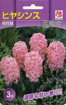 花の大和 球根 ガーデンヒヤシンス 桃花種 3球セット