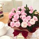 母の日 ギフト カーネーション バンビーノ 4号鉢 送料無料 贈り物 プレゼント 花 鉢植え