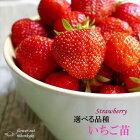 選べるいちご苗9cmポットイチゴ苺